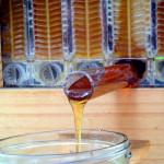 De Flow Hive Bijenkorf